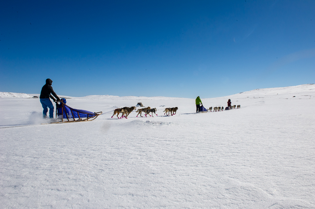 Dog sledding expedition Hardangervidda – a unique experience!